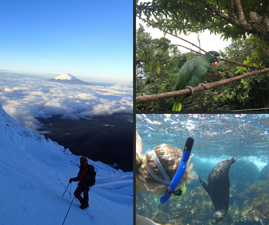 Collage, der viser bjergbestigning, Amazonas junglen og Galápagos