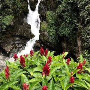 Billede af vandfald og smukke blomster i Baños - Ecuadors mekka for adventure!