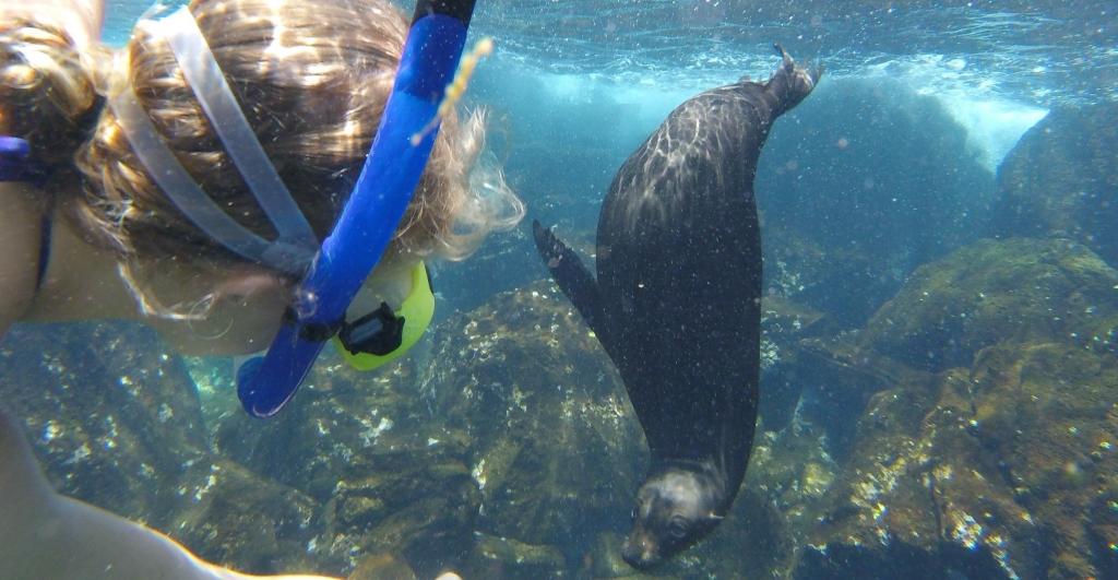 Billede af snorkling med søløver - ægte Galapagos adventure!