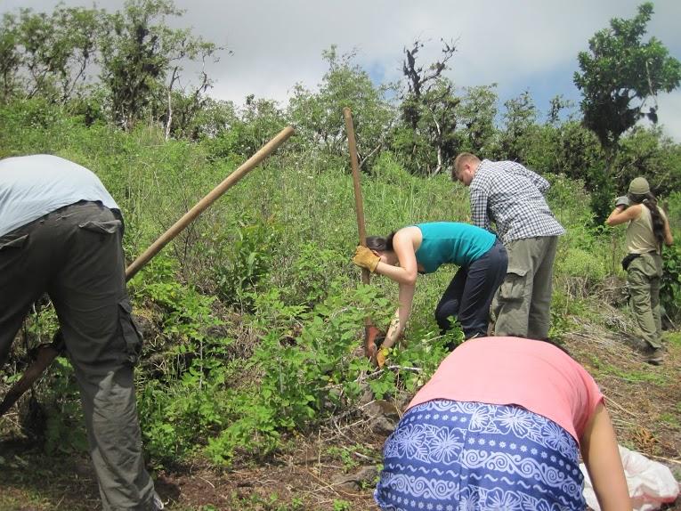 Billede af frivilligt arbejde på Galapagos i højlandet